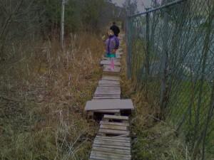 A marshy path